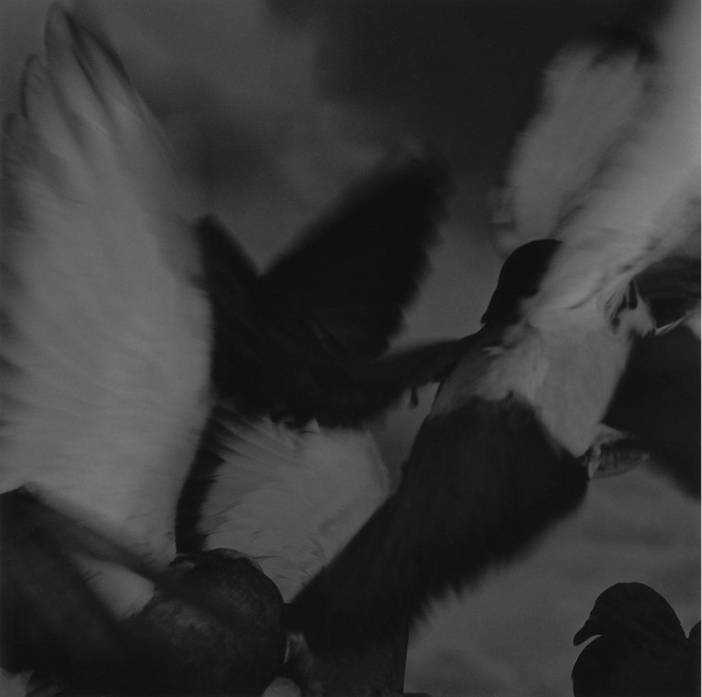Birds No.6 1994